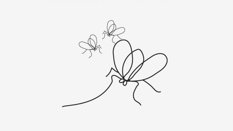 moscas1